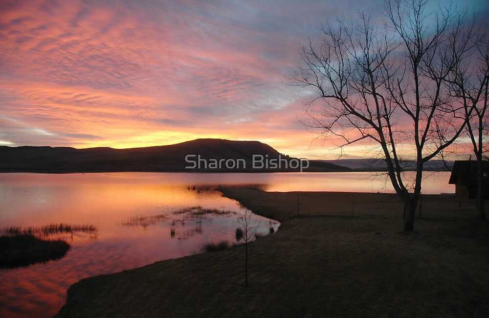 Firey sunrise  by Sharon Bishop