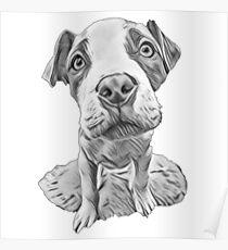 Pit Bull Puppy - Cute Pitbull Design Poster