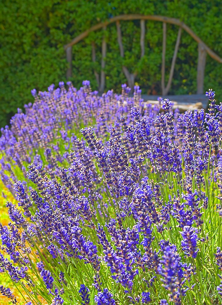 Lavendar with Seat by Neil