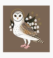 Familiar - Barn Owl Photographic Print