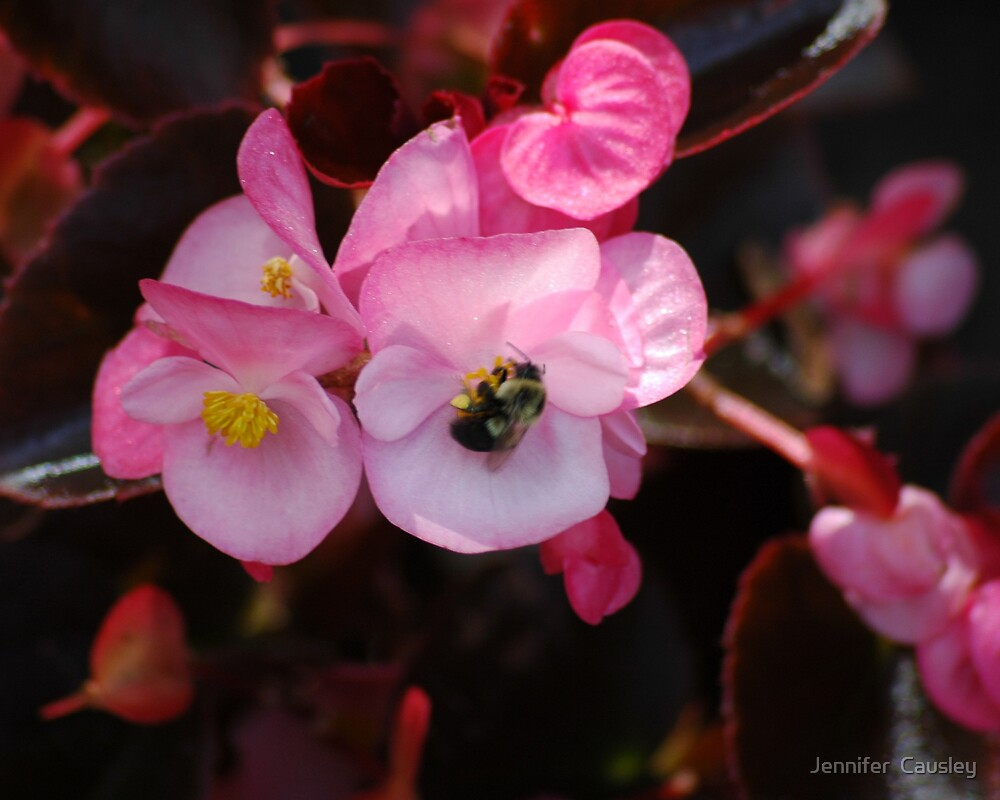 Bee on Pink Flower by Jennifer  Causley