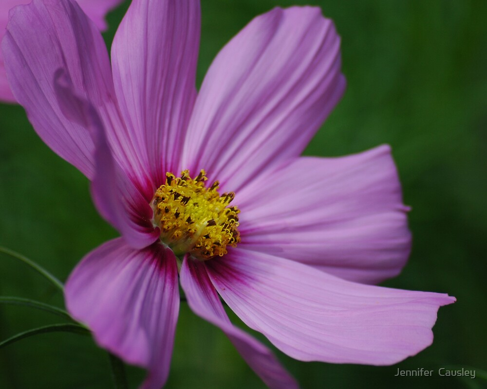 Purple Flower by Jennifer  Causley