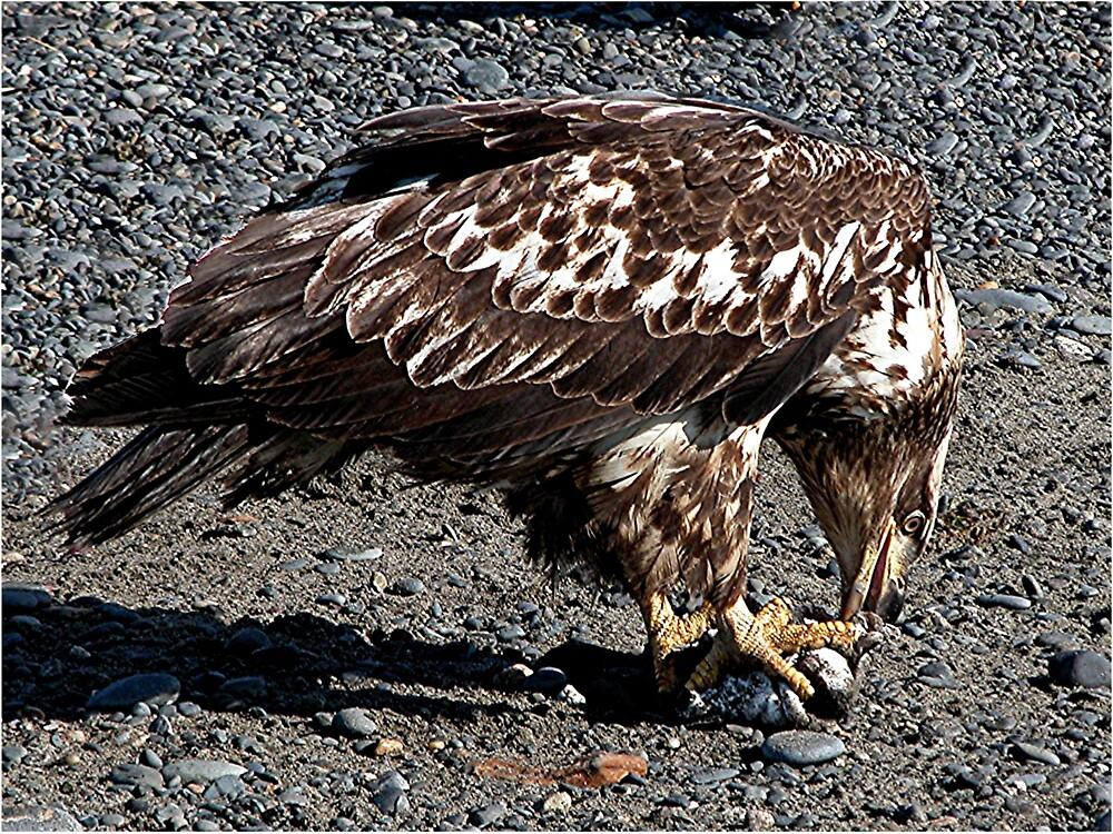 Golden Eagle by SunnyDay