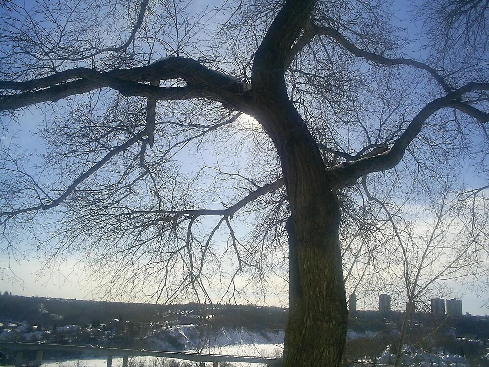 huge tree on hill by oilersfan11