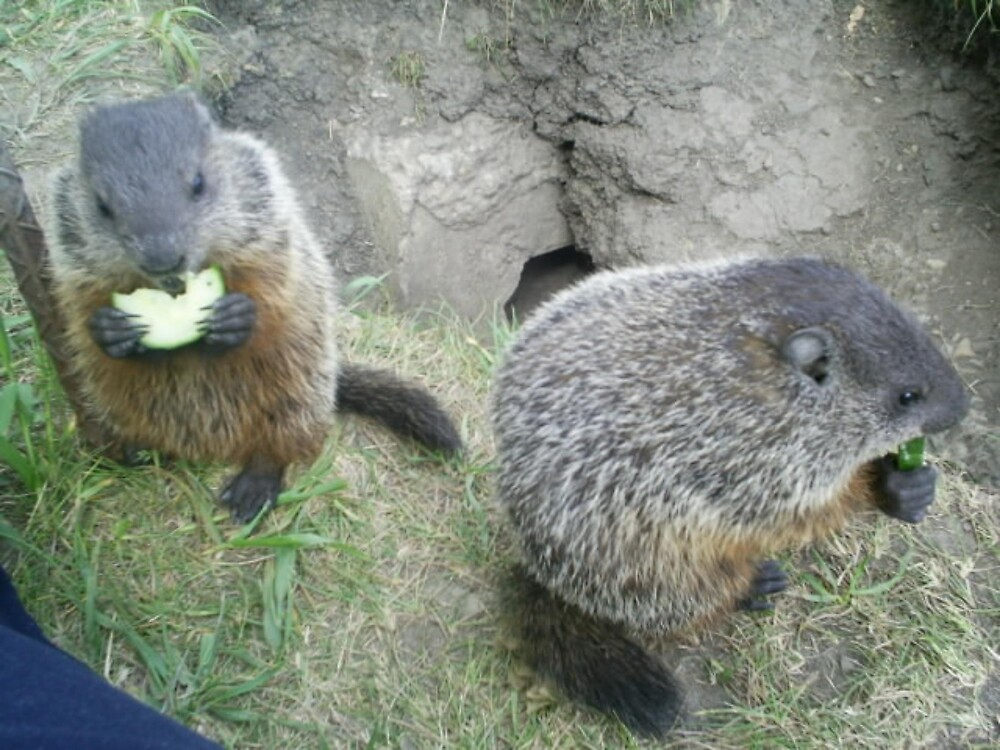 family groundhogs by oilersfan11