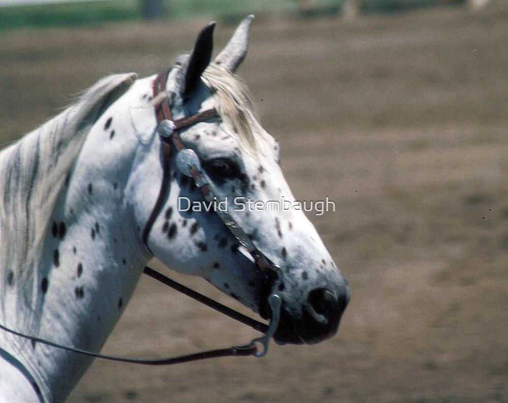 horse by David Stembaugh