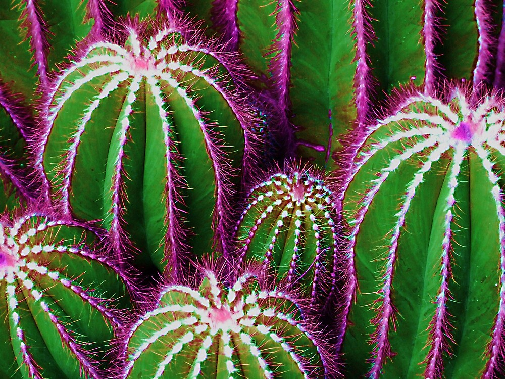 cactus-01 by archibald