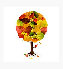 Awesome abstract tree  leaf colors Photographic Print