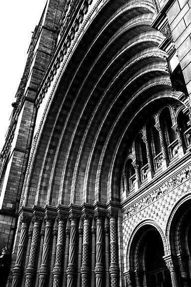 The National History Museum by Lewis Packman