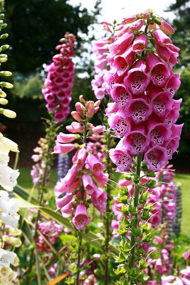 purplish flower by pelangihumaira