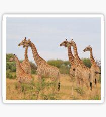 Giraffe Humor - African Wildlife - Amazing Stare Sticker