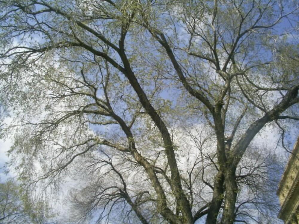 beauty tree branches by oilersfan11