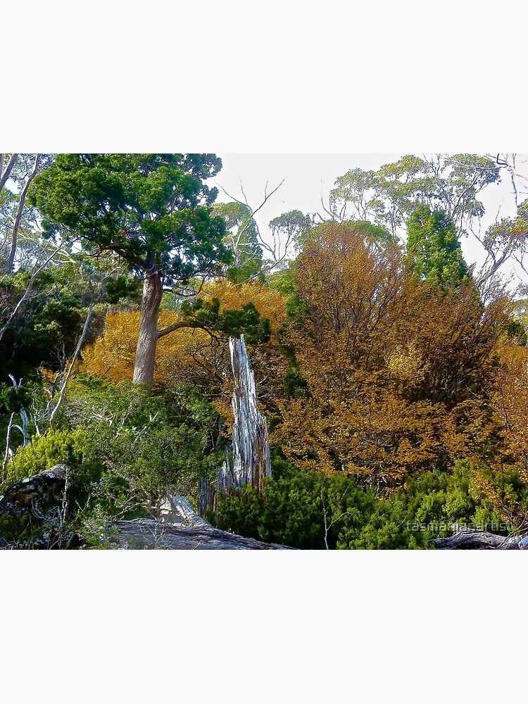 FAGUS ~ SCENES & SCENERY ~ Green and Gold by tasmanianartist by tasmanianartist