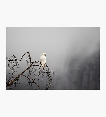 Cockatoo in the Mist Photographic Print