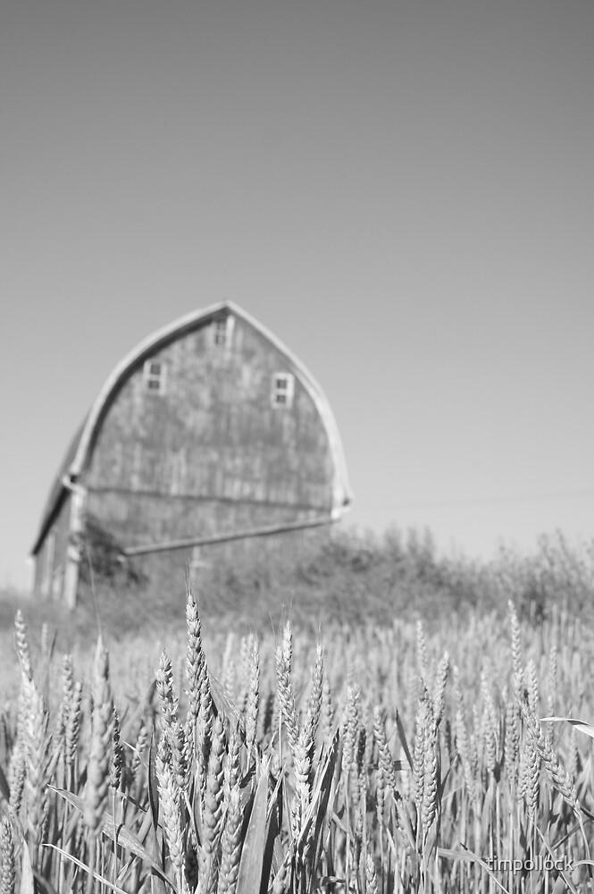 Barn near Saline by timpollock