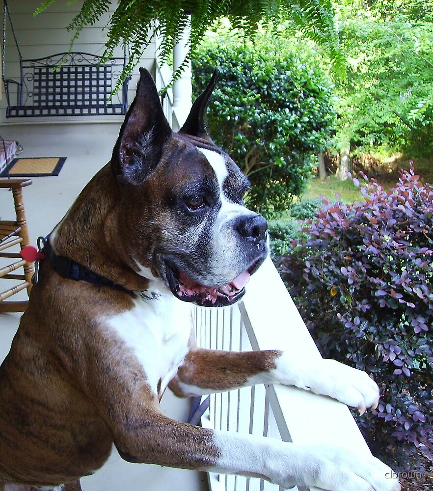 Dog Watching by clbrown