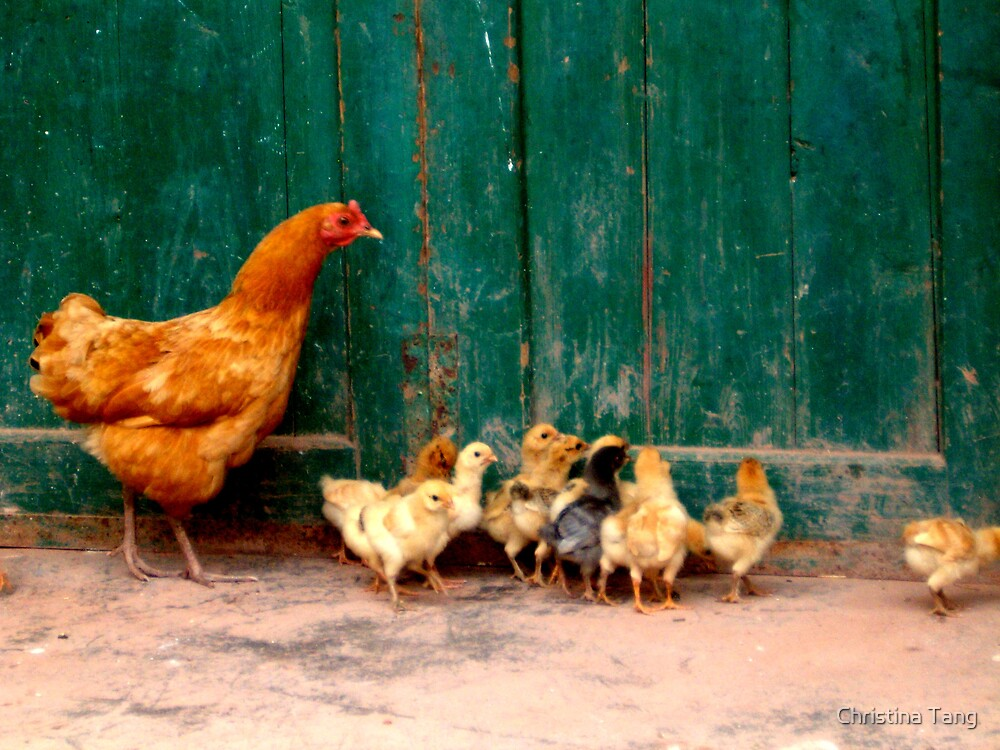 Mother Hen and Chicks by Christina Tang