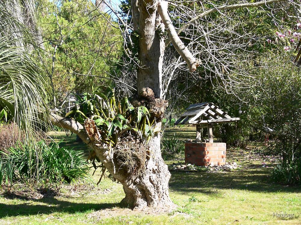 Wishing Well in old garden by Heabar