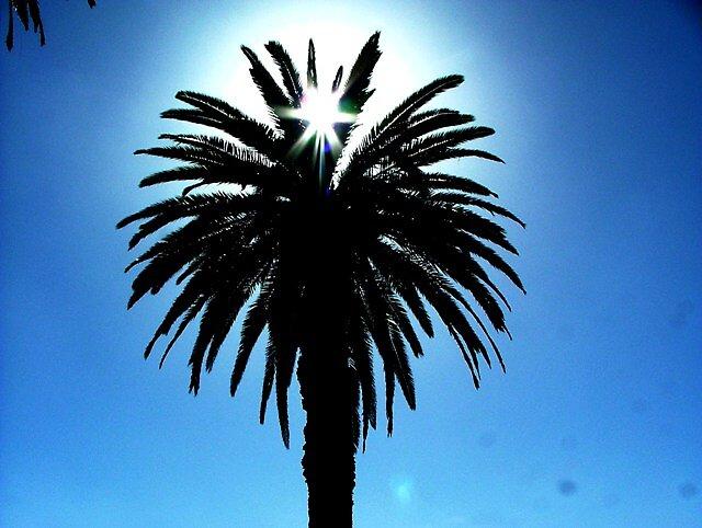Palm Tree by richardhelich