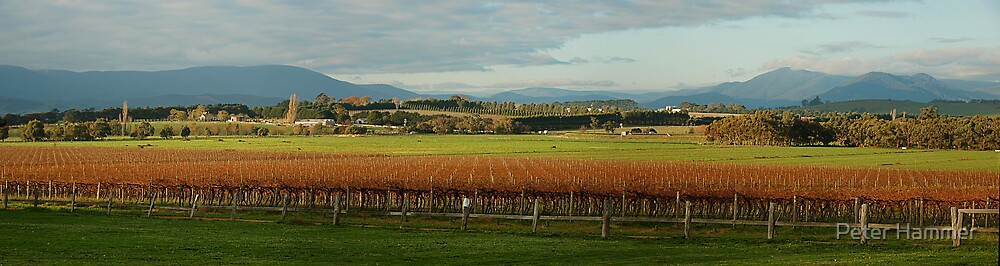 Yarra Valley by Peter Hammer