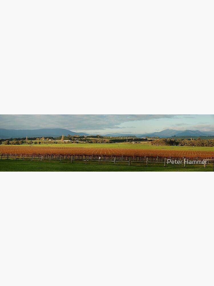 Yarra Valley by PeterH