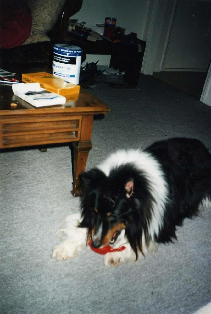 doggy named duffy by oilersfan11