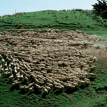 Sheep by Pierre