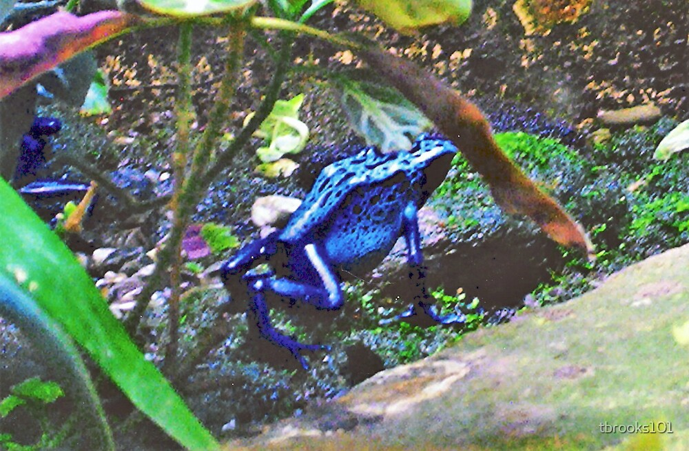Blue Frog.... by tbrooks101