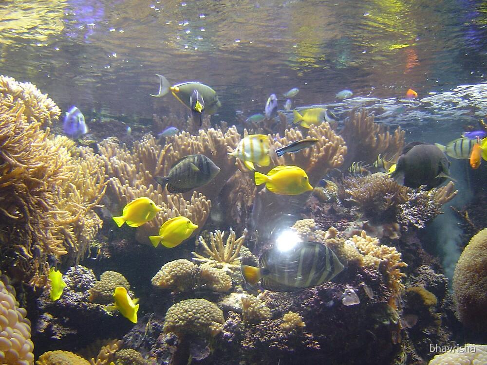 Aquarium by bhavrisha