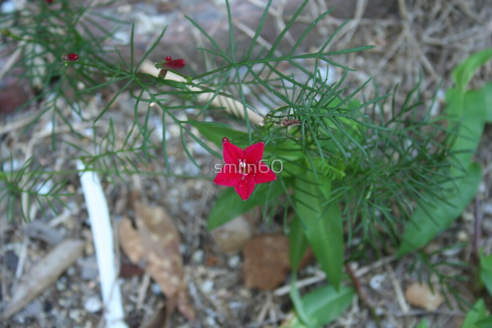 Hummingbird flower by smiln60