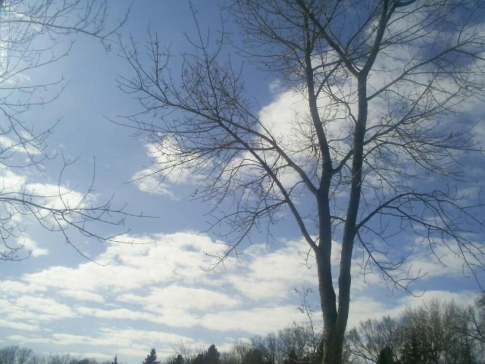 clouds on a warm day by oilersfan11