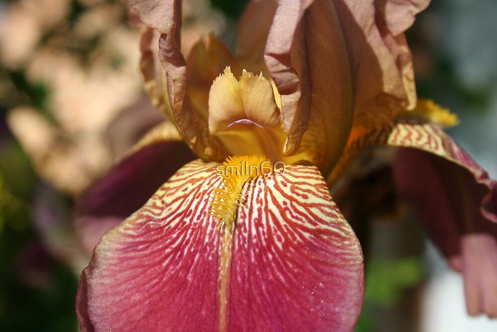 Alien Iris by smiln60