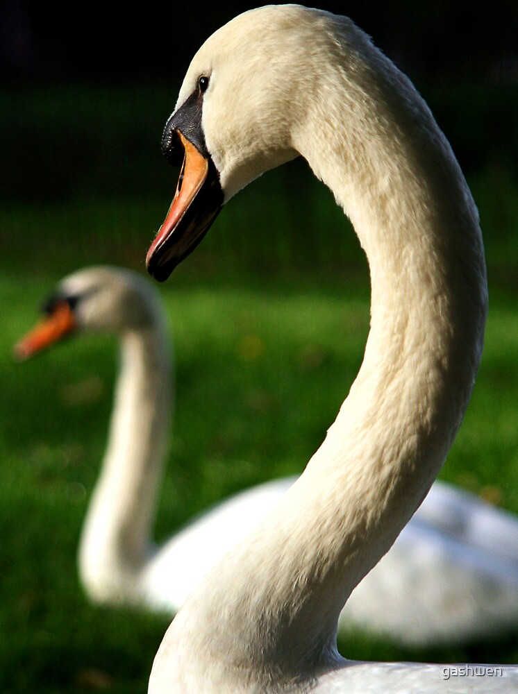 swan kiss  by gashwen
