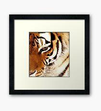 Tiger! Tiger! Burning Bright! Framed Print