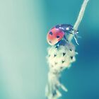 """""""With the heart of a child, your dreams come true"""". Ladybird macro by tanjica"""