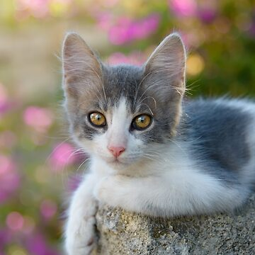 Cute young bicolour cat kitten by kathom