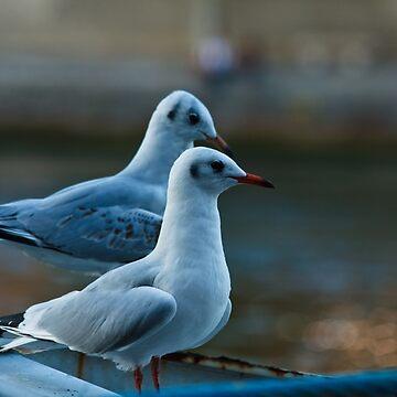 Seagulls by neoweb
