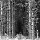 Wooded Pathway by Lee Jones