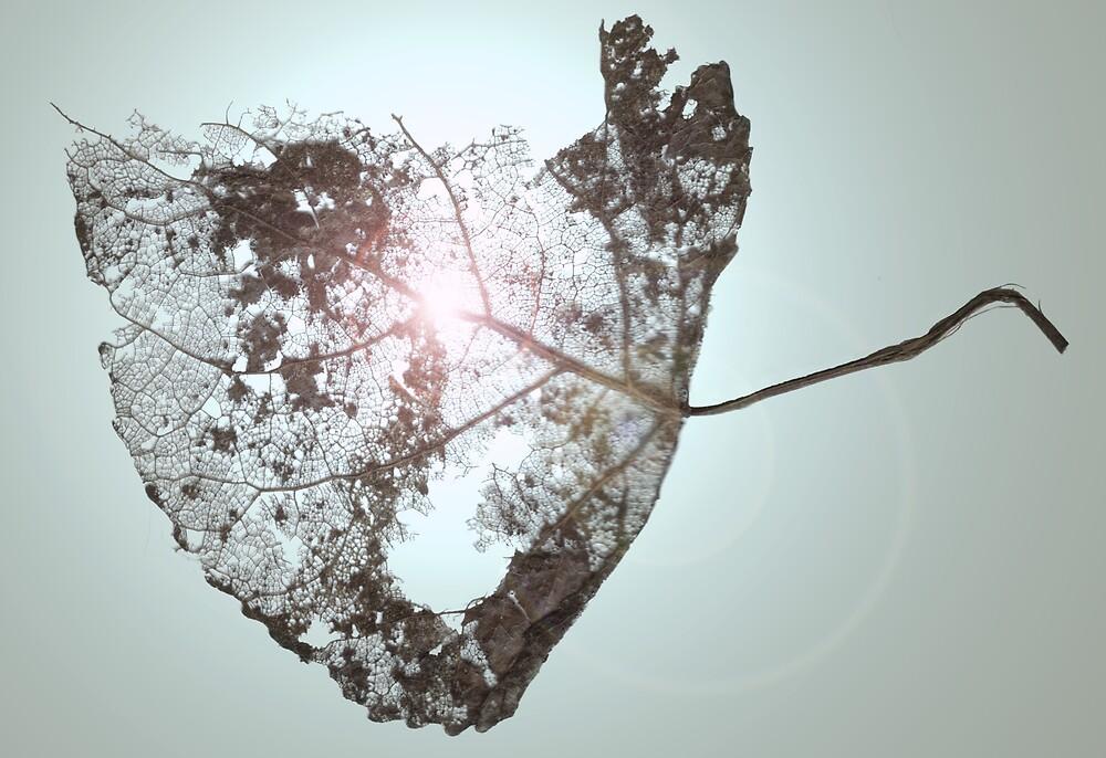 Skeleton Leaf by Hippo