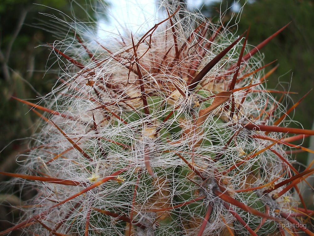 A thorny tropical cactus by dipdatdog