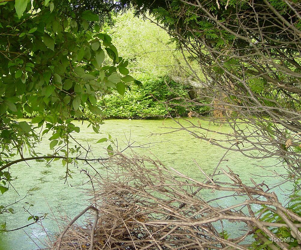 swamp by Isebella