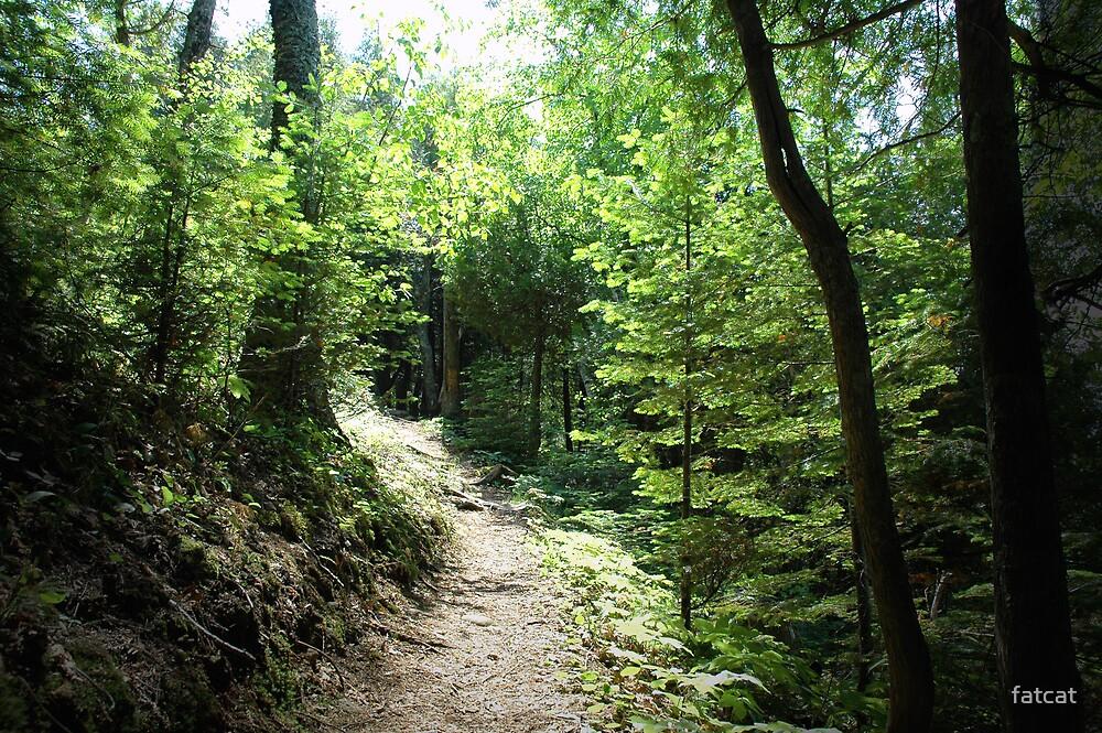 Hiking Path by fatcat