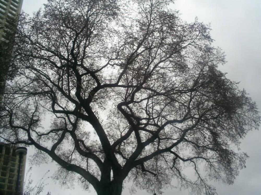 big huge tree by oilersfan11