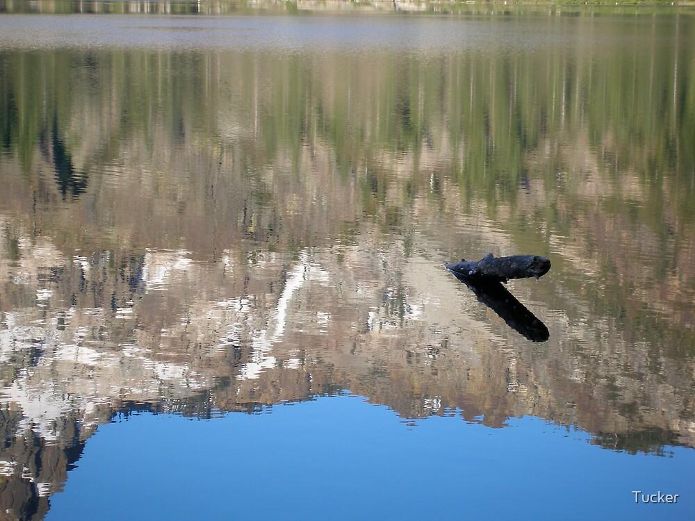 Sardine Lake, CA by Tucker