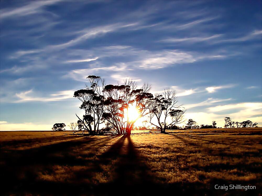 Into The Shadows by Craig Shillington
