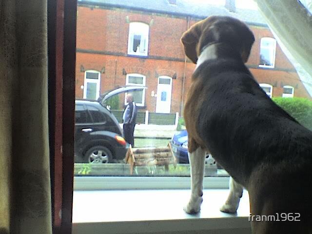 B The Beagle by franm1962
