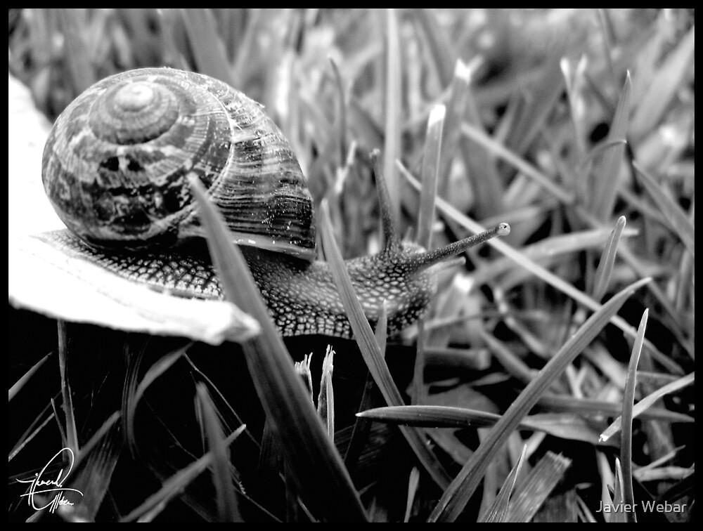 Snail B&W by Javier Webar