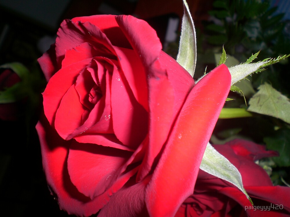 red rose by paigeyyy420