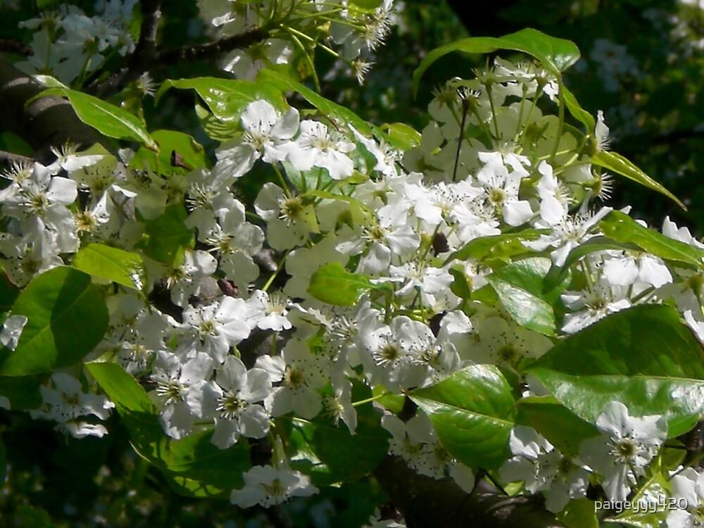 flower by paigeyyy420