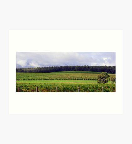 Pemberton Vineyard Panorama  Art Print